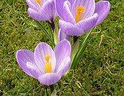 Spring at Hillcrest